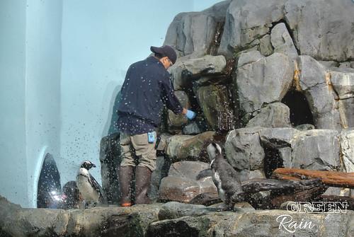 160703d Splash Zone and Penguins _18