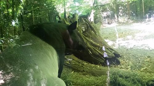 Woodland Park Zoo Not Aardvark 2