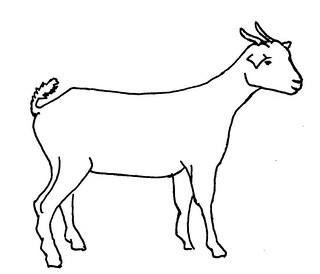 Image Result For Sheep Coloring Pages