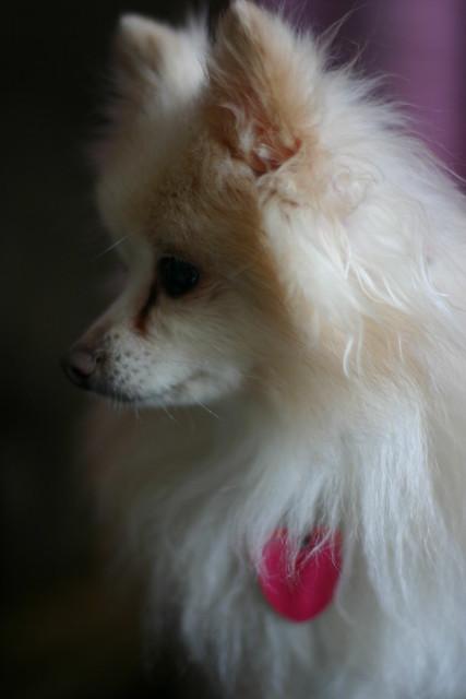 Pixie Profile