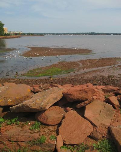 Low tide #pei #charlottetown #victoriapark #skyline #latergram #charlottetownharbour