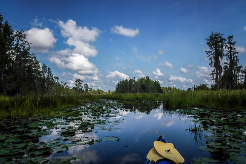 Lowcountry Unfiltered at Okefenokee-075