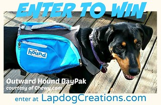 Win an Outward Hound DayPak