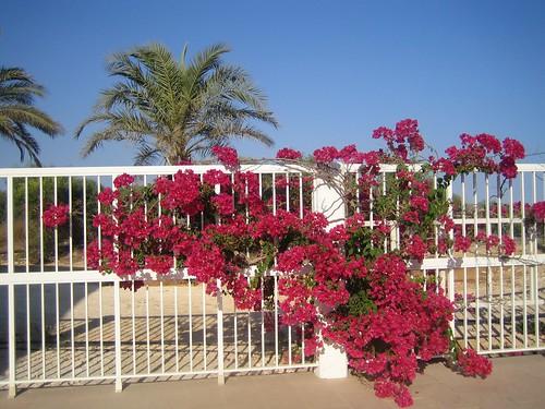 Hotel Zypern  Sterne