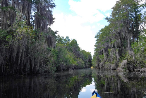 Lowcountry Unfiltered at Okefenokee-092