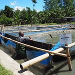 Gleno hatchery ponds, Timor-Leste. Kate Bevitt, 2016.