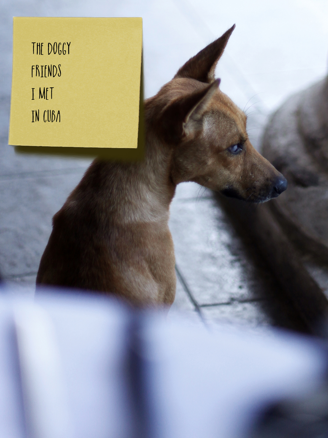 havana dogs 1