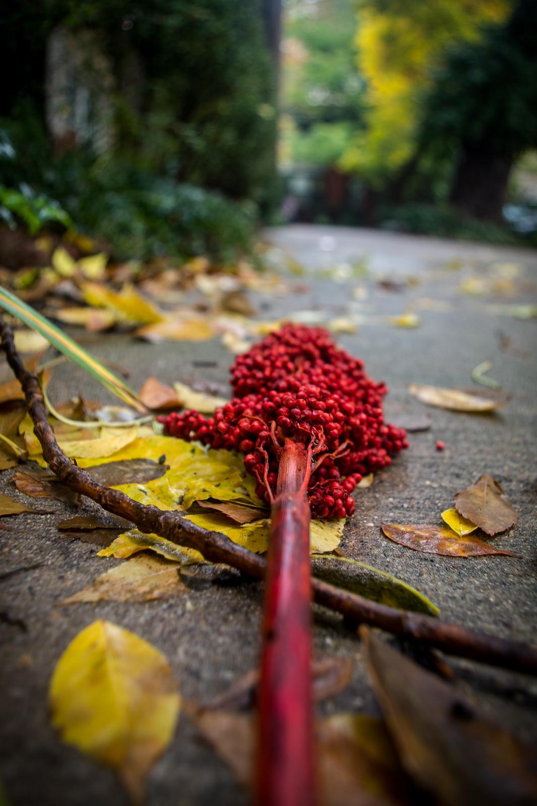 (291/366) Autumn Sidewalk