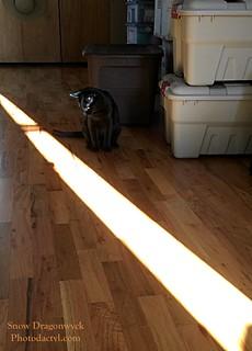 20160816-Angus Sunbeam