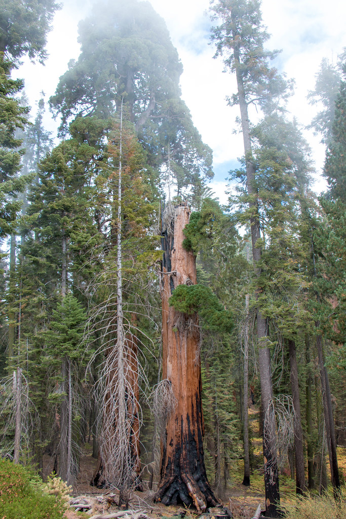 10.16. Sequoia National Park