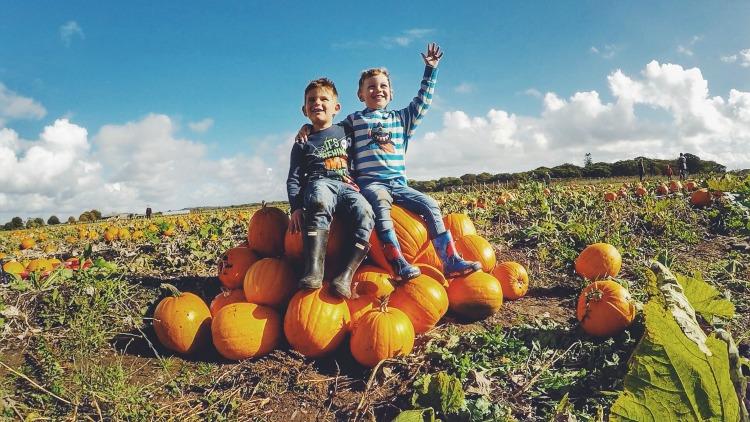 pumpkin pals