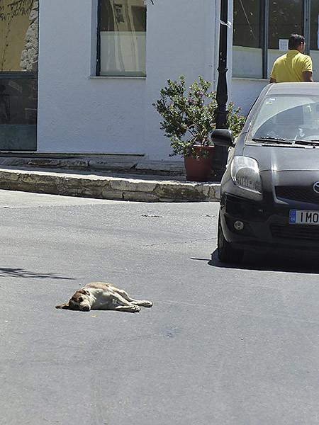 sieste de chien