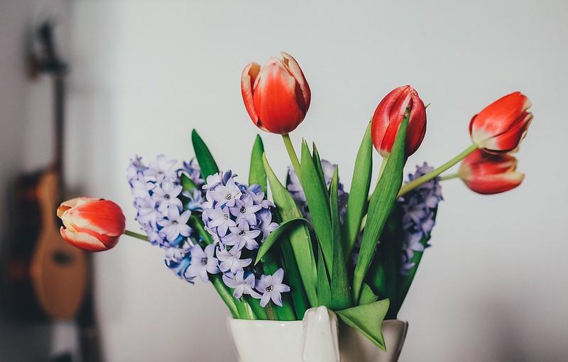 tulips-1209097_1280
