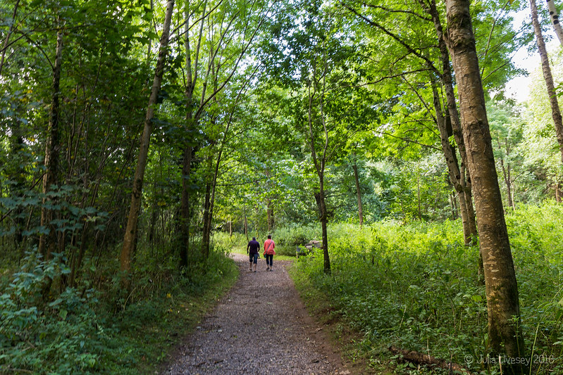 In the Woodland Walk (1)