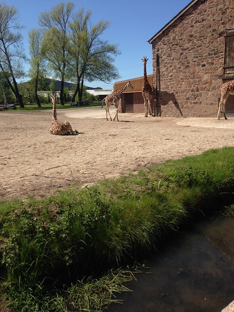 Chester Zoo, exams and the end of the year