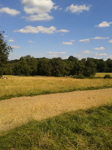 Hampstead Heath Summer Day
