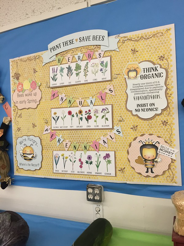 bee display