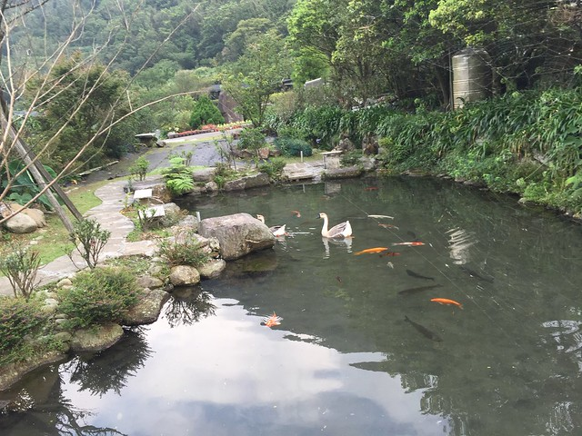 竹子湖2016071706點 (31)