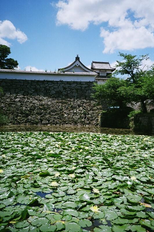 スイレン / 福岡城跡