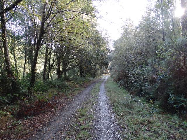 Camino en la Ruta das Bidueiras