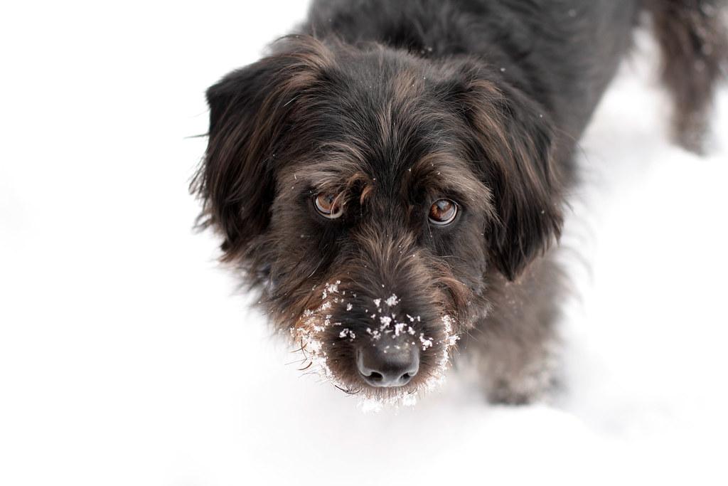 Snowy Charlie