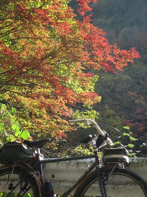 Akasawa Forest