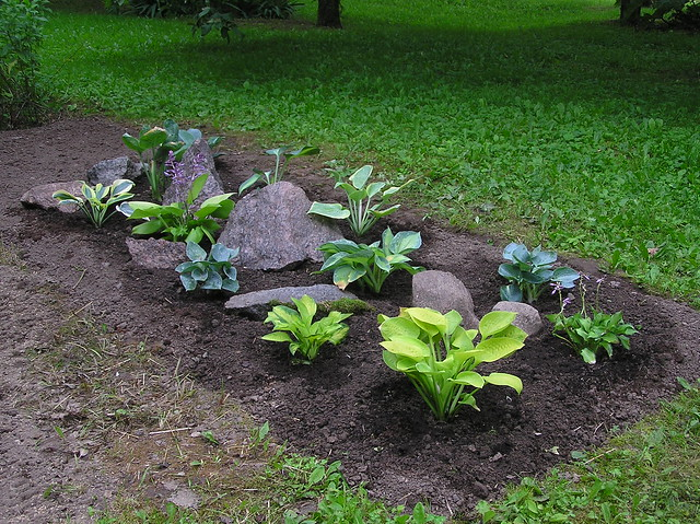 New Hosta Bed