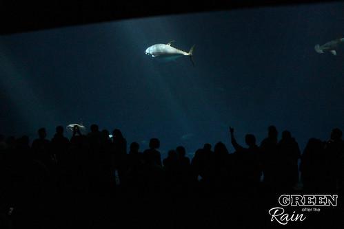 160703c Deep Sea _65