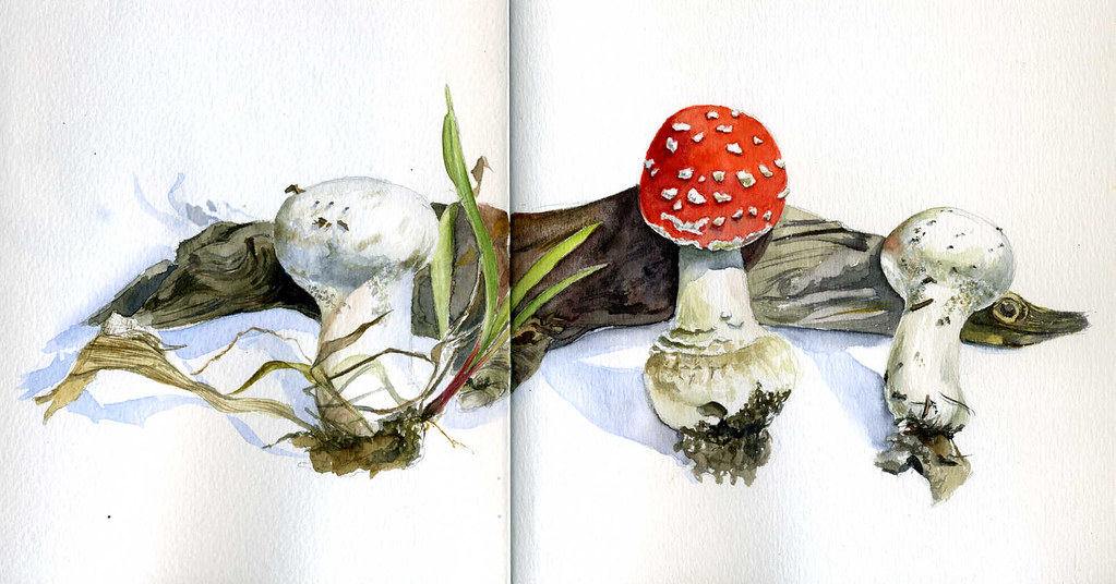 The composition with the branch and fly agaric.