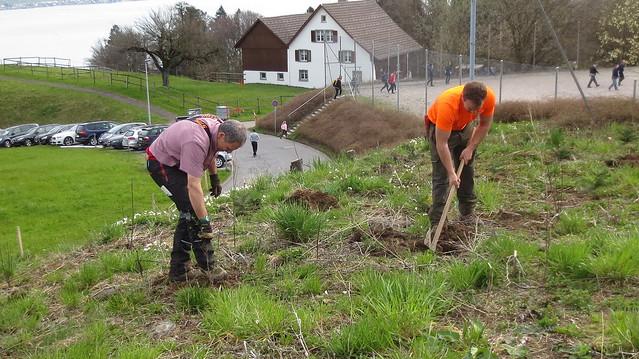 2015-04-11 Heckenpflanzung