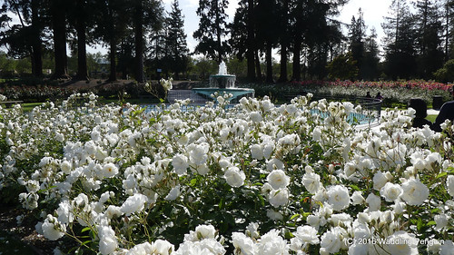 San Jose Municipal Rose Garden
