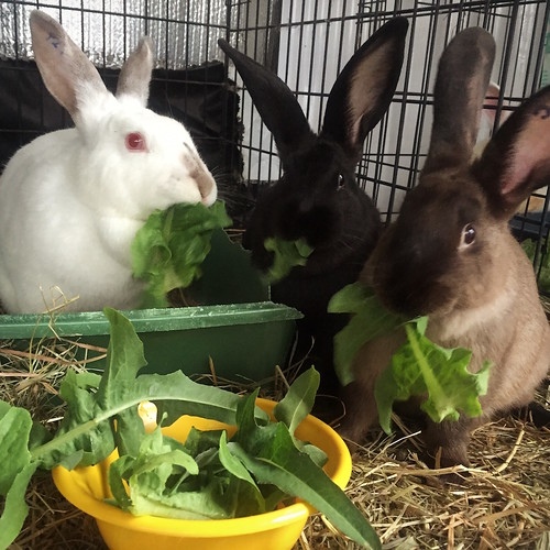 rabbits being well fed
