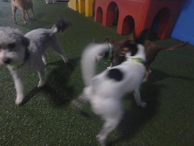 07_23_16 Playtime! :)