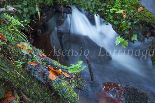 Parque Natural de #Gorbeia #DePaseoConLarri #Flickr      -1425