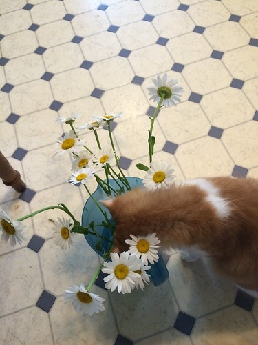 Winston takes time to smell the daisies