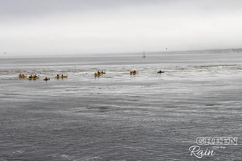 160703f Monterey Bay Aquarium _054