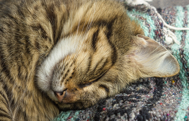 Ember Sleeping - Close-Up