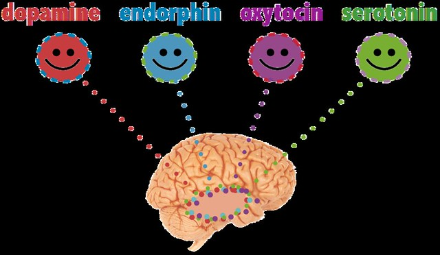 Hacking Into Your Happy Chemicals: Dopamine, Serotonin, Endorphins, & Oxytocin