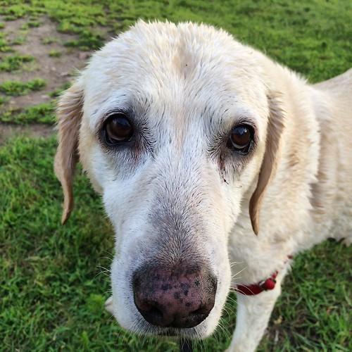 One wet doggie #Daisy