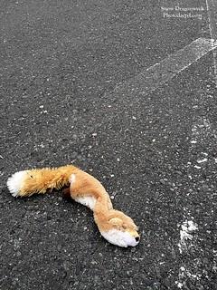 20160629-Roadkill