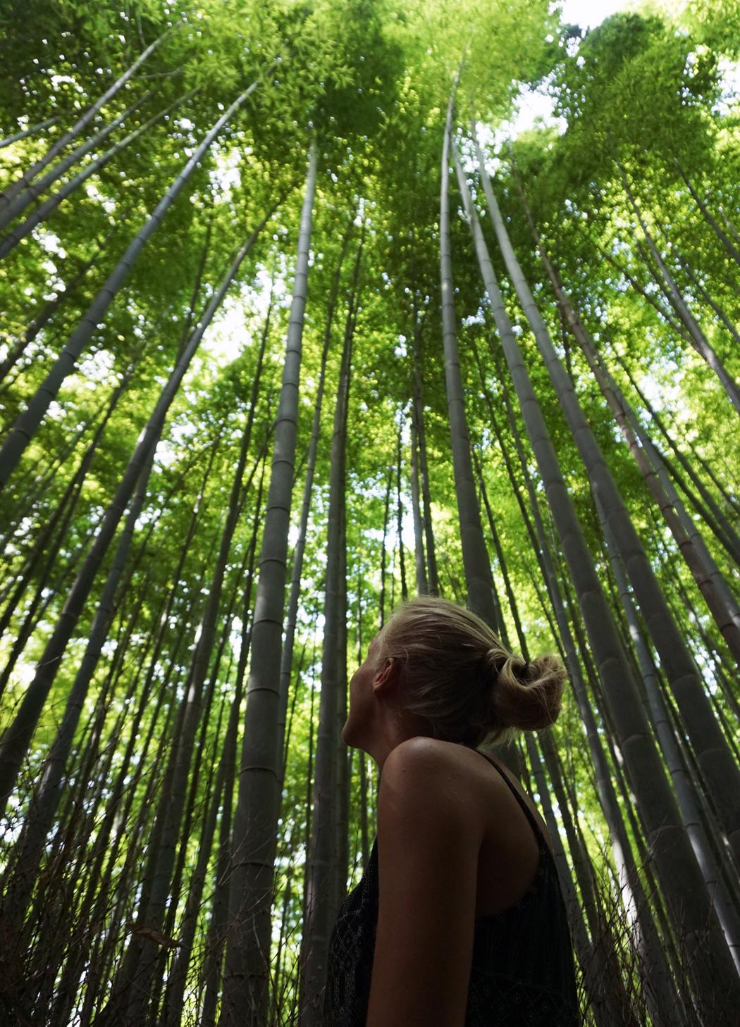 bambu12