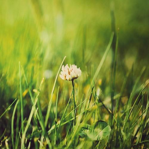 A Scene of Springtime