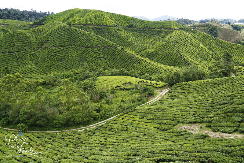 cameron highlands palas tea view