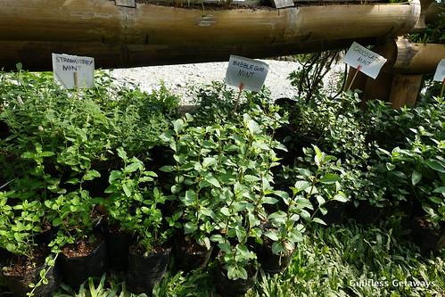 herbs-bukidnon.jpg