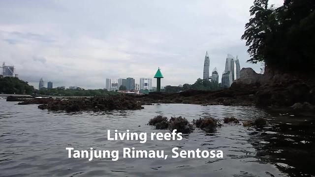 Living reefs, Tanjung Rimau Sentosa