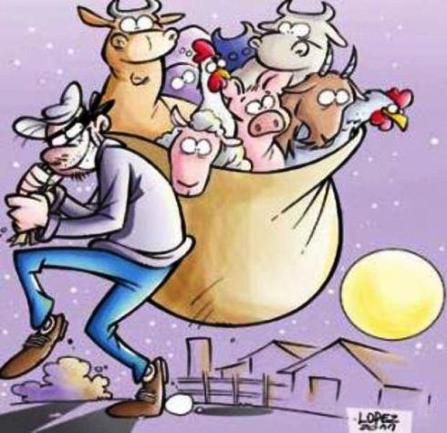 Resultado de imagem para ladrão de gado
