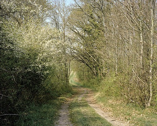 95_reminiscence_pathway