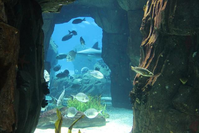 oceanario-lisboa15