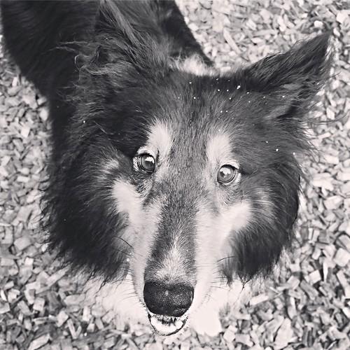Happy Jasper
