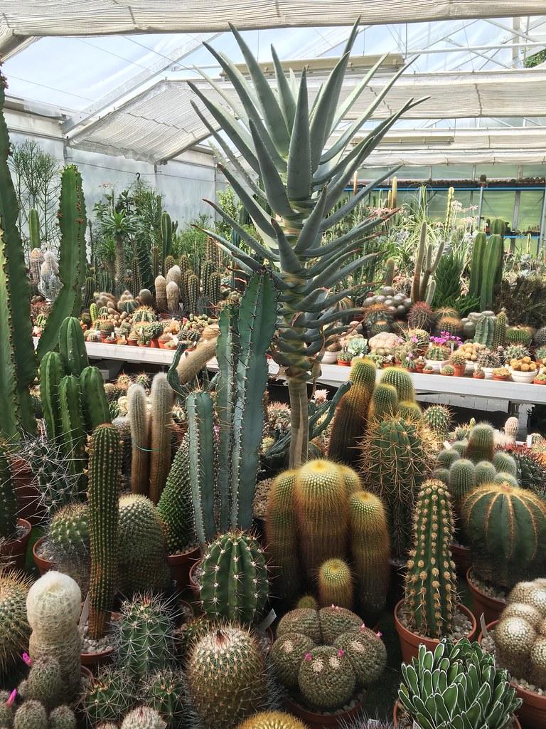 Ha-Ka-Flor - cactus et plantes grasses 27773719473_93ac421243_b